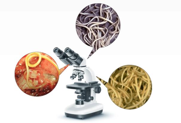 Bactefort - ราคา - อาหารเสริม - ราคาเท่าไร