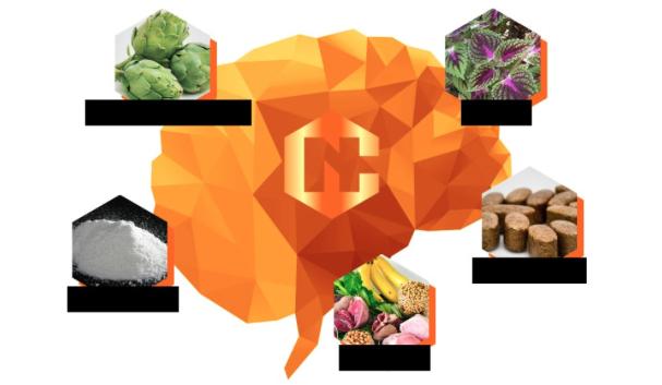 Neurocyclin – original – ขายที่ไหน – ซื้อที่ไหน – หาซื้อได้ที่ไหน